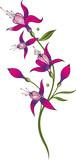 Florale filigrane Ranke mit Fuchsien. Sommerranke mit lila, pinken Blüten.