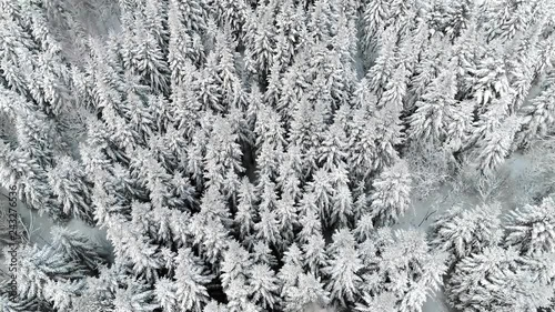 Drone view of  forest in winter time
