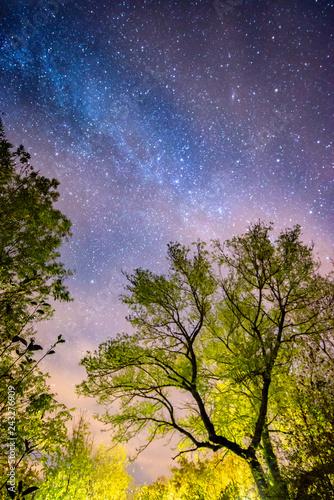 Trees and stars at night