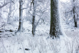 Winter in frost forest with tree and snow - 243280595