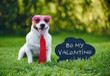 Valentines card greeting with dog wearing tie and glasses next to inscription on blackboard