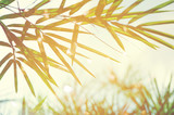Bamboos Forest or bamboo foliage and sunlight and space for text
