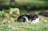 homeless cat curled up and sleeps - 243289905