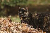 cat in a pile of fallen leaves