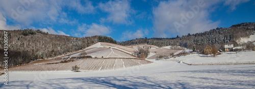 canvas print picture Weinberge Reben im Winter