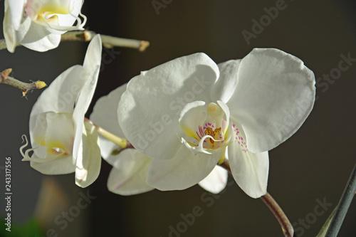 Orchideen, Muttertag, Hintergrund - 243317556