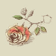 A rose on the table. Pink flower greeting card