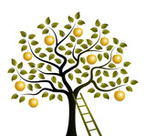 golden apple tree and ladder - 243333352