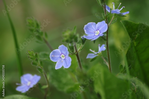 Fioletowe kwiaty na tle rozmytej łąki