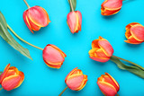 Bouquet of tulips on blue background - 243345147