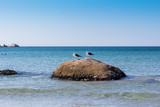 Two seagulls on a rock at the beach - West coast South Africa - Image