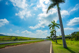 Road with palm trees. Nice asphalt road with palm trees against blue sky and cloud.  - 243364523
