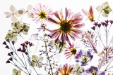dry flowers on the white background - 243366795