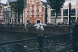 Vorwitzige Möwe mit ausgebreiteten Flügeln sitzt auf einem Brückengeländer an einem Grachten Kanal in Amsterdam, Niederlande