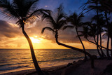 Palm trees at sunrise or sunset on the caribbean sea - 243422367