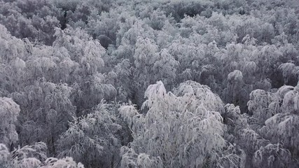 Aerial view of a winter snow-covered pine forest. Winter forest texture. Aerial view. Aerial drone view of a winter landscape. Snow covered forest © Stavros