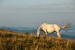 White horse on background of mountain peaks