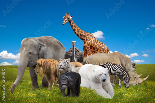 Wild savanna animals collage