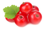 red currant with green leaf isolated on a white background. macro. healthy food - 243444984