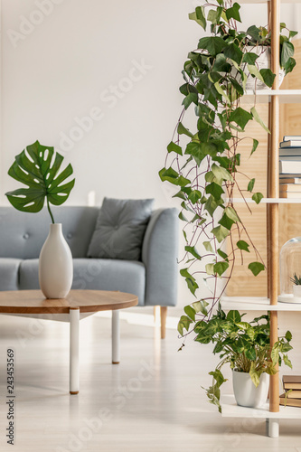 Wall mural Urban jungle in natural living room with grey Scandinavian couch and ivy in pot on bookshelf
