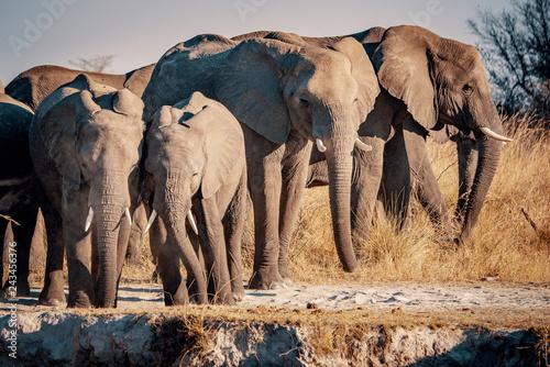 Gruppe Elefanten am Kwando River bei Sonnenuntergang, Caprivi, Namibia