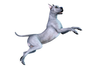 3D Rendering Brindle Grat Dane Dog on White © photosvac