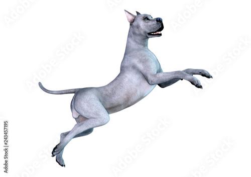 3D Rendering Brindle Grat Dane Dog on White