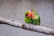 Leinwandbild Motiv Couple d'oiseaux inséparables