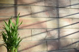 Bamboo plant with sun light