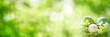 Leinwandbild Motiv Green spring scenery with easter eggs