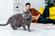 selective focus of british shorthair cat and man with book on floor