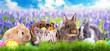 Leinwandbild Motiv Osterhasen in der Natur auf dem Feld mit Osternest