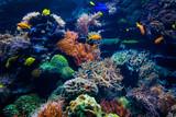 beautiful underwater world - 243513599