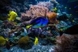 underwater coral reef landscape  with colorful fish - 243520154