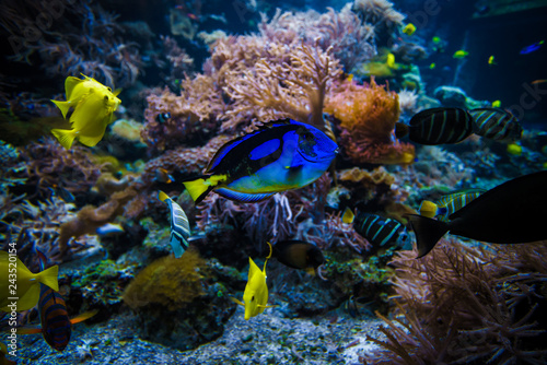 mata magnetyczna underwater coral reef landscape with colorful fish