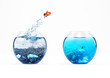 Leinwandbild Motiv Improvement and moving concept with a goldfish jumping from a dirty aquarium to a clean one