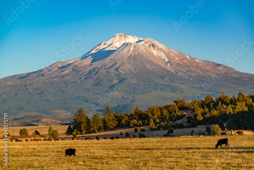 Mount Shasta and cattle ranch
