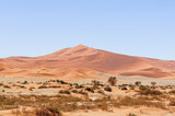 Dunes with acacia trees in the Namib desert / Dunes with acacia trees in the Namib desert, Namibia, Africa. - 243576308