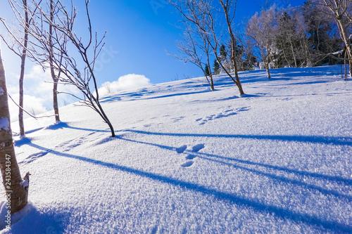 新雪と足跡
