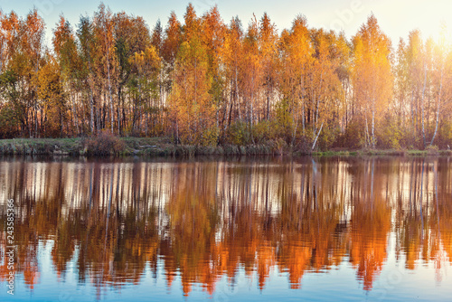 Autumn birch trees by the lake at sunset time. - 243585366