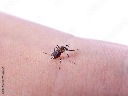 Mosquito bite isolated on white backgrond - 243602356