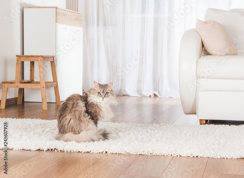 obraz lub plakat Cat lying on carpet
