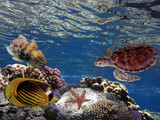 Underwater scene. Coral reef and turtle in clear ocean water