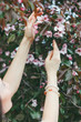 The young woman girl raises her hand to pluck blossoms, spring b