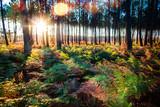 Fototapeta Las - lever de soleil sur la forêt © Image'in