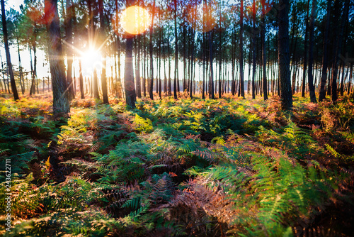 lever de soleil sur la forêt - 243622711