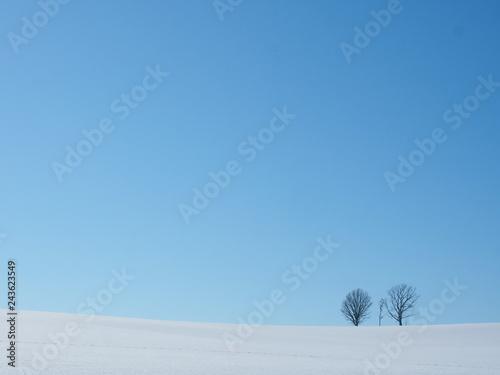北海道 冬の美瑛 親子の木