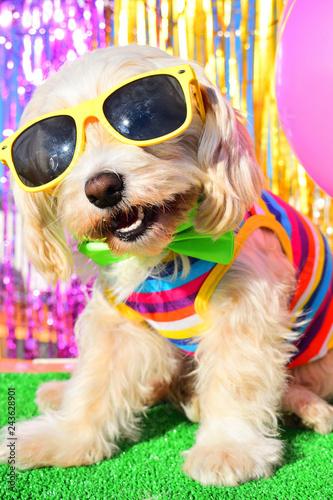 Foto Murales happy party dog