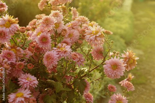 Wall mural Flowers background with sunshine