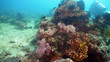 Quadro Fish and coral reef at diving. Wonderful and beautiful underwater world with corals and tropical fish. Hard and soft corals. Philippines, Mindoro. Diving and snorkeling in the tropical sea.